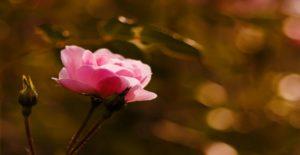 Healing Spring Online Offers